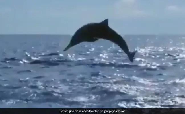 World Oceans Day 2021: Watch The Acrobats Of The Ocean Flip, Twist, Jump