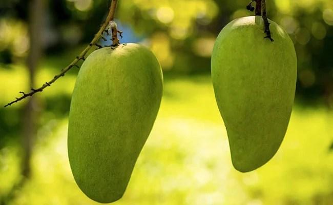 """US, China Decline Pakistan's """"Mango Diplomacy"""", Send Back Fruit Souvenirs: Report"""