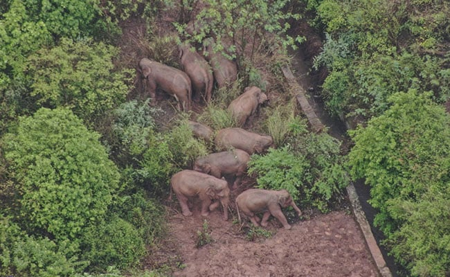 Trekking Elephants Wait For Slower Youngster To Catch Up