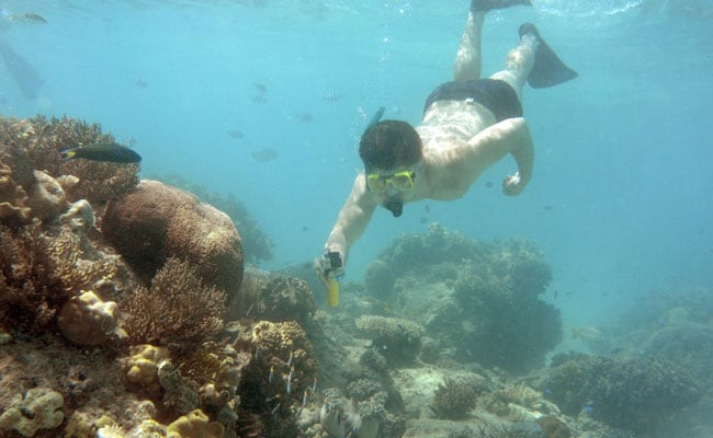 Why Australia's Great Barrier Reef's World Heritage Status Is At Risk