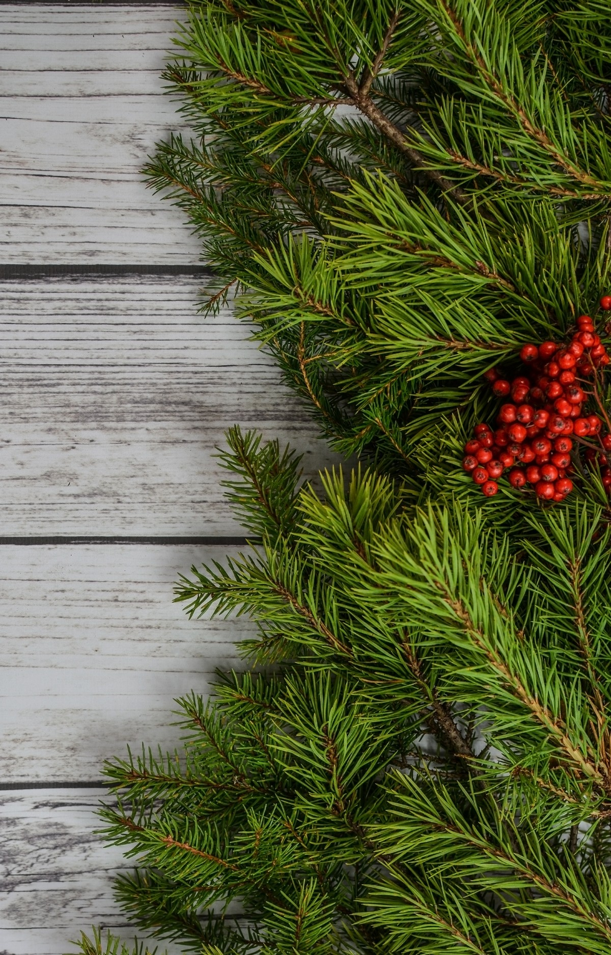 Free Images Background Backdrop Xmas Holiday