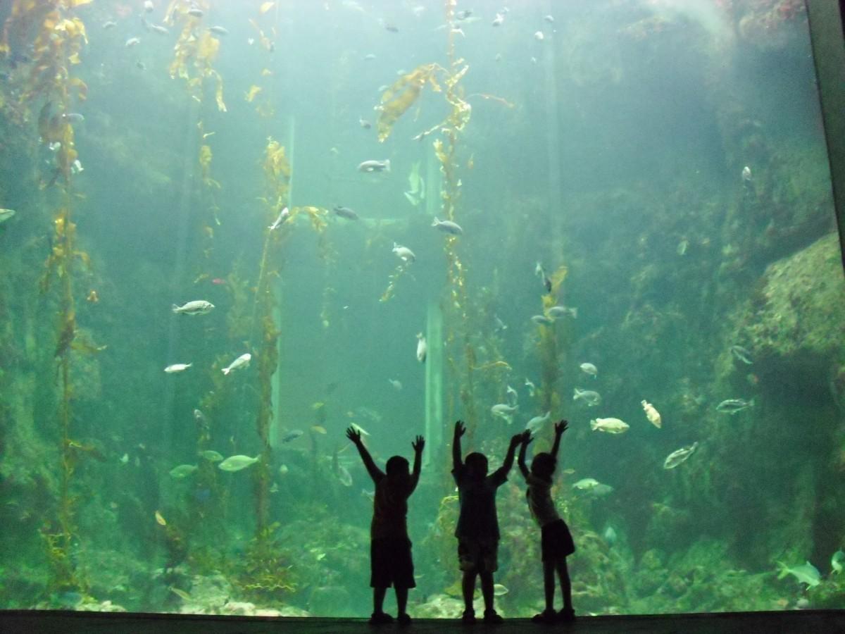 Free Images Beach Water Underwater Seaweed Coral