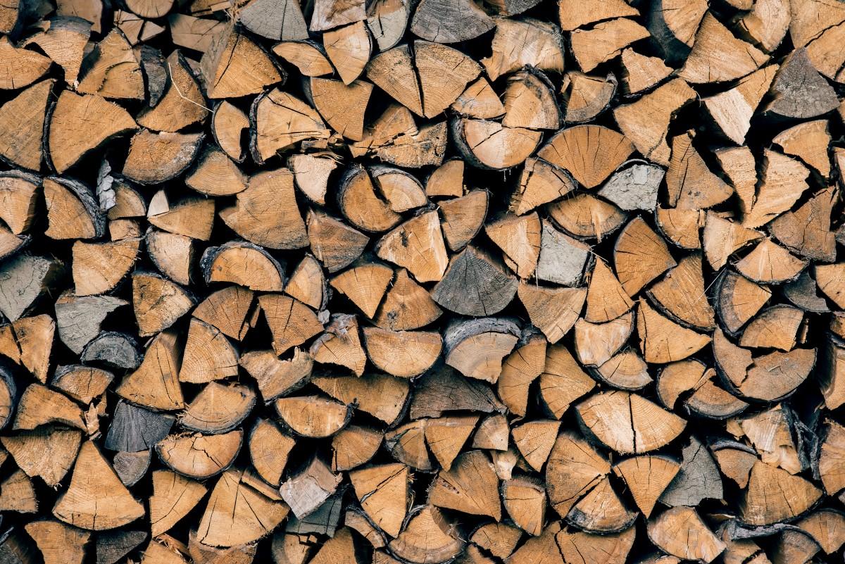 Free Images Tree Rock Branch Texture Leaf Floor
