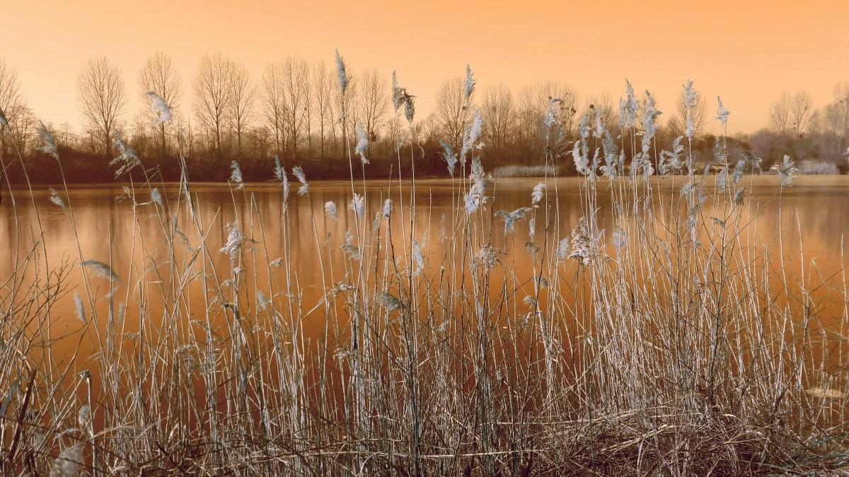 Free Images Landscape Tree Nature Marsh Swamp Light