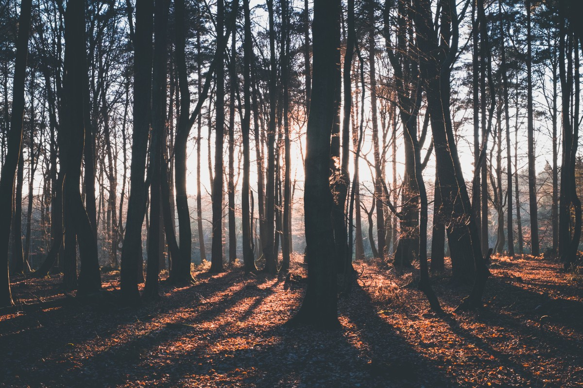 Free Images Tree Forest Person Photographer Autumn