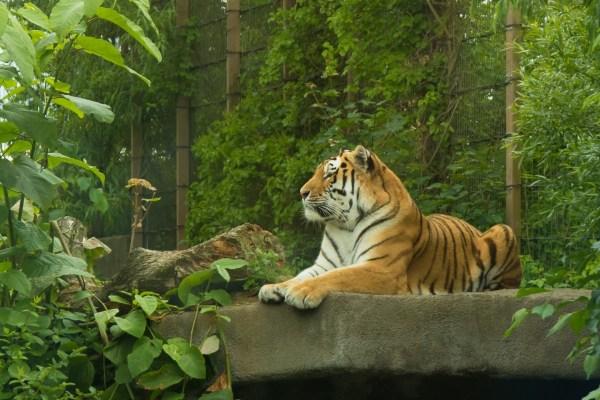 картинки : Дикая природа, зоопарк, Джунгли, Кот, Фауна ...