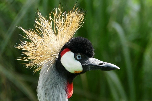 Free Images : nature, wing, looking, wildlife, red, beak ...