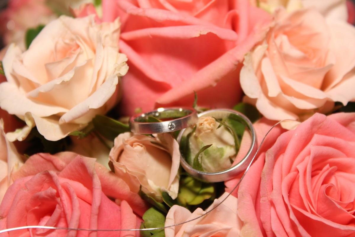 Free Images Petal Red Floristry Before Wedding Rings