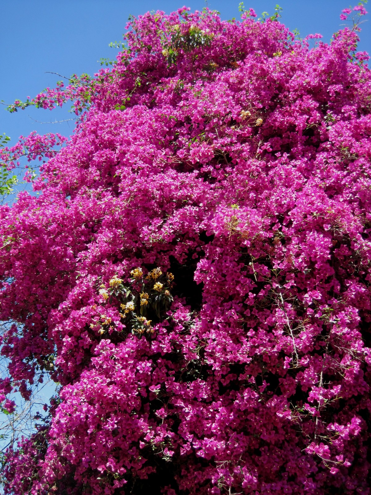 Tall Plant Pink Flowers