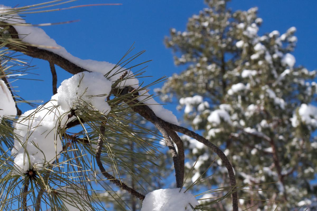 Kostenlose Foto Baum Ast Schnee Winter Vogel Tier