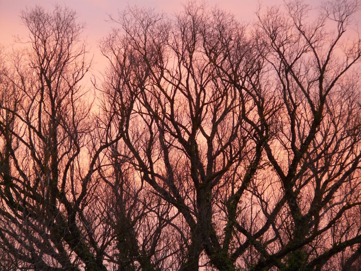Free Images Grass Branch Light Night Sunlight