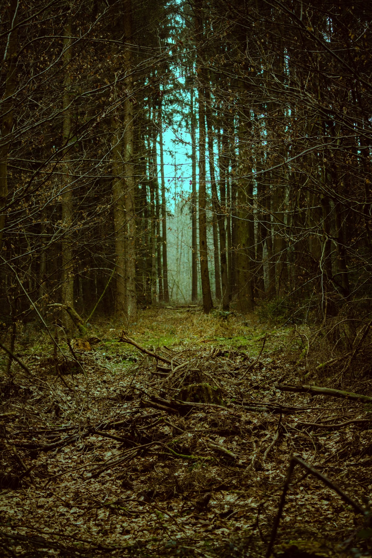 Free Images Landscape Tree Nature Forest Path