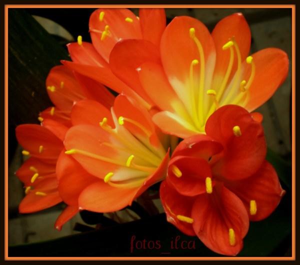 обои : цветы, Португалия, Фотосилька ...