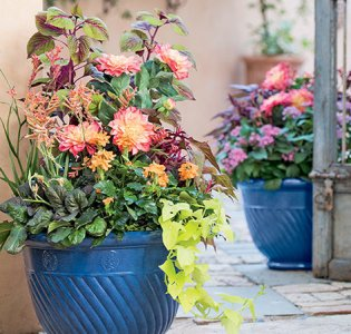 How to Create Sensational Pots and Planters   Container Gardening