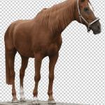 American Quarter Horse Arabian Horse Mustang Stallion Andalusian Horse Chestnut Horse Mare Horse Tack Png Klipartz