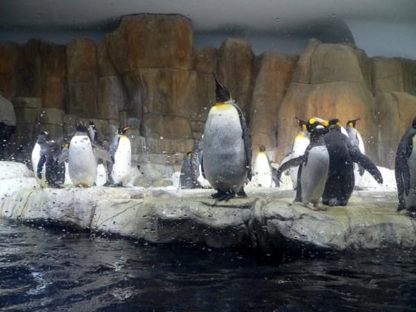Omaha Henry Doorly Zoo | Omaha | Tourist Attractions ...