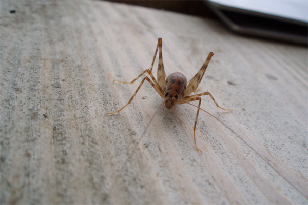 Image Result For How Do You Get Rid Of Spiders In Your Ba T