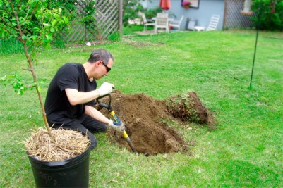 Man planting a tree in his yard