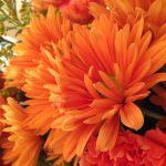 Bright Summer Flower Fall Orange Flower Orange Color Free Image Peakpx