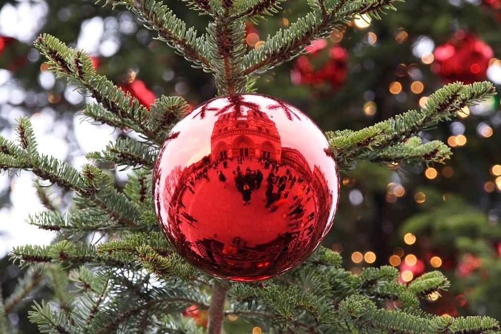 Christmas Tree At Notre Dame De Paris France Reflection