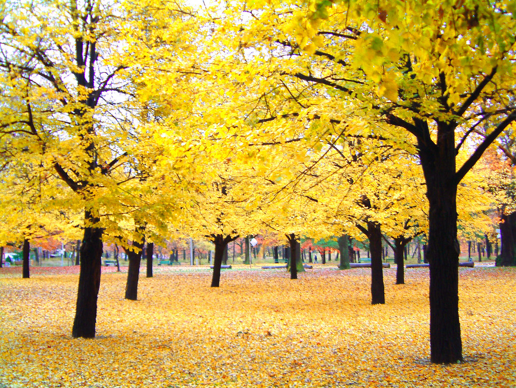 Yellow In The Fall My Fave Shot So Far Check Out My