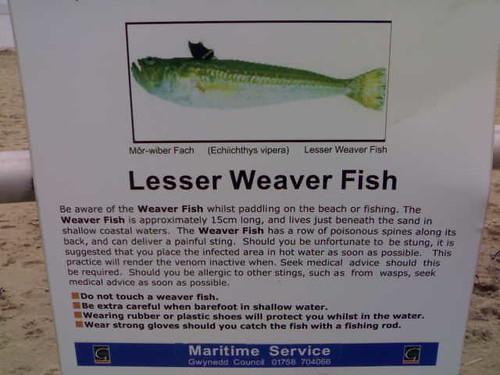Beware The Lesser Weaver Fish 11022007 Hugovk Flickr