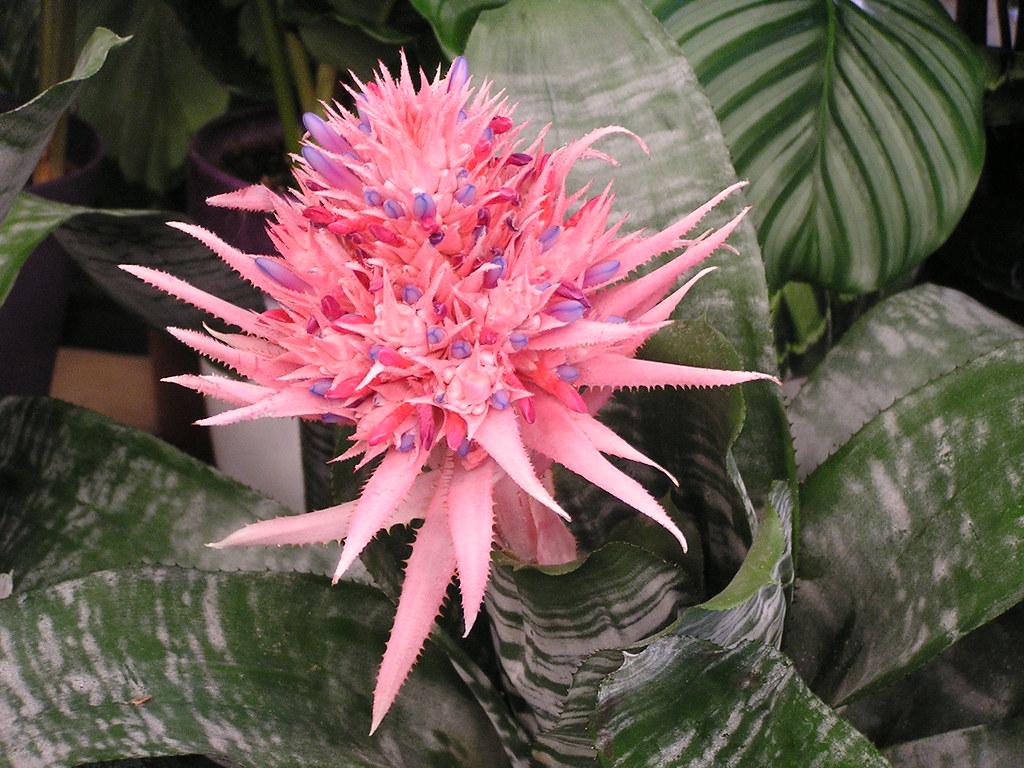 flores Presas La Umbria y El Pintor Gran Canaria Islas Canarias 207 cactus