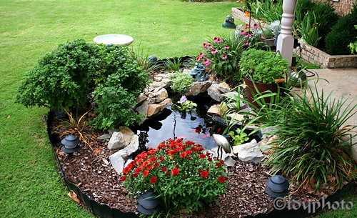 goldfish-pond   Front yard water feature   Terence Young ... on Front Yard Pond  id=13101