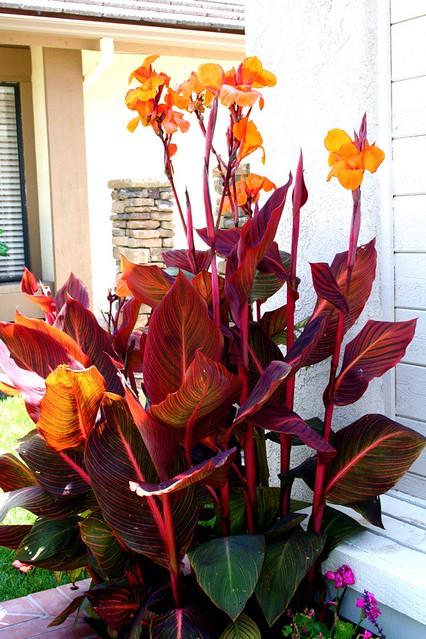 Outdoor Potted Plant Arrangements