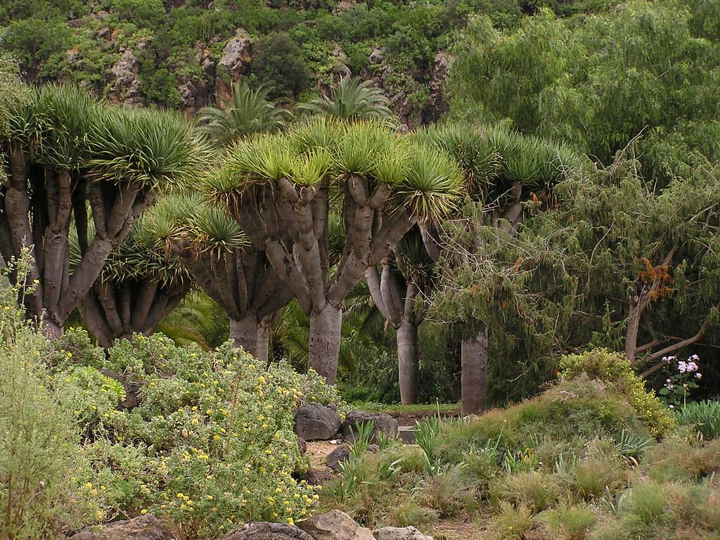 arboles Jardin Canario Las Palmas de Gran Canaria Islas Canarias senderismo 054