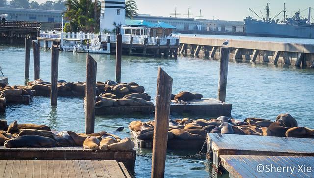 Pier 39 Sea Lion