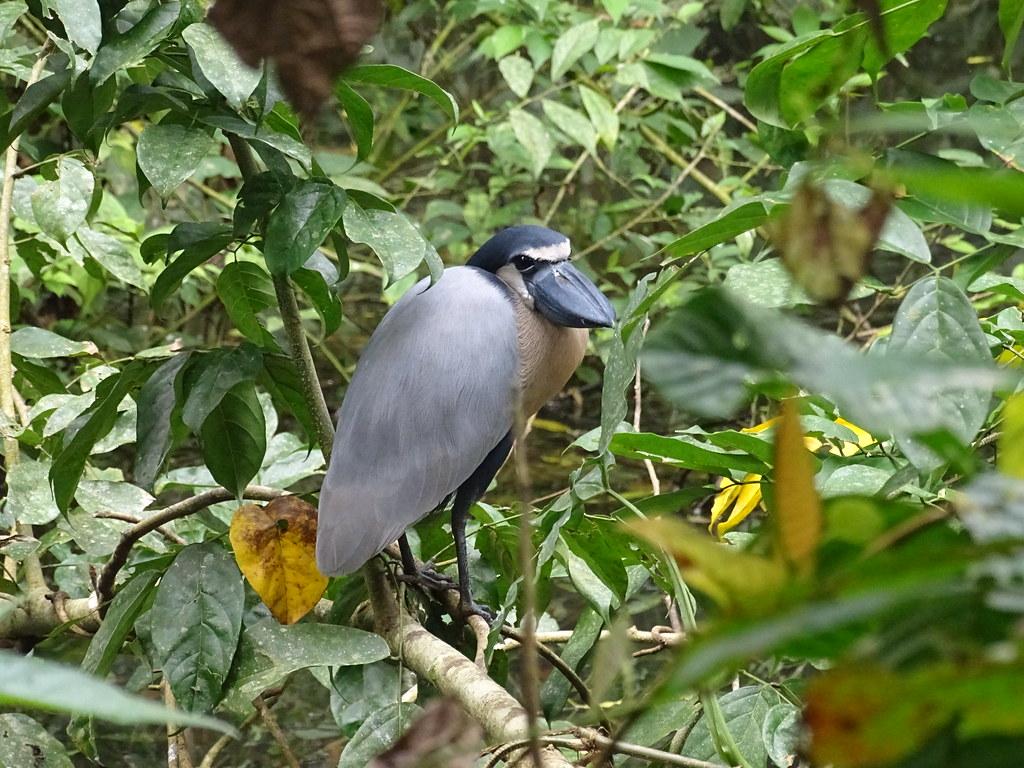 La Fortuna Ecocentro Danaus Reserva Biológica animales fauna Costa Rica 13