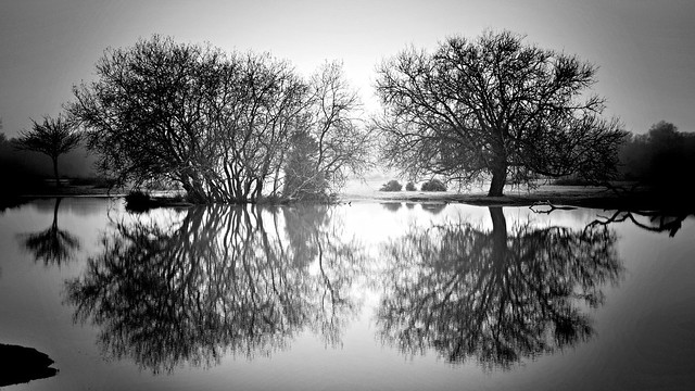 Tranquil Trees - Placid Pond