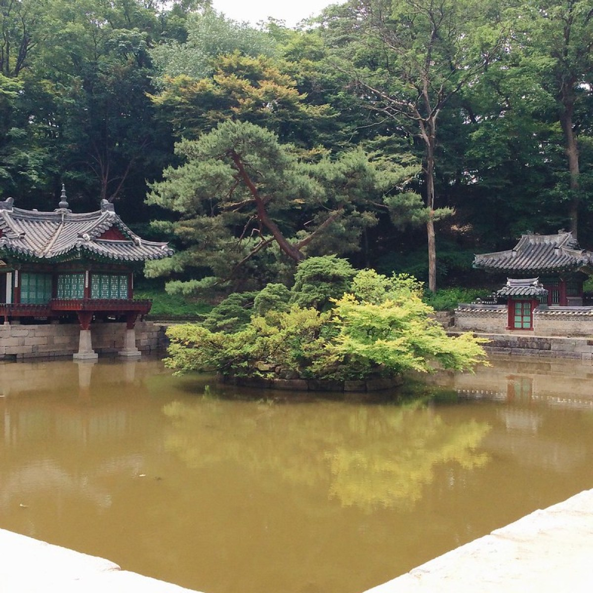 A bonsai like tree in the middle of a pond in Huwon