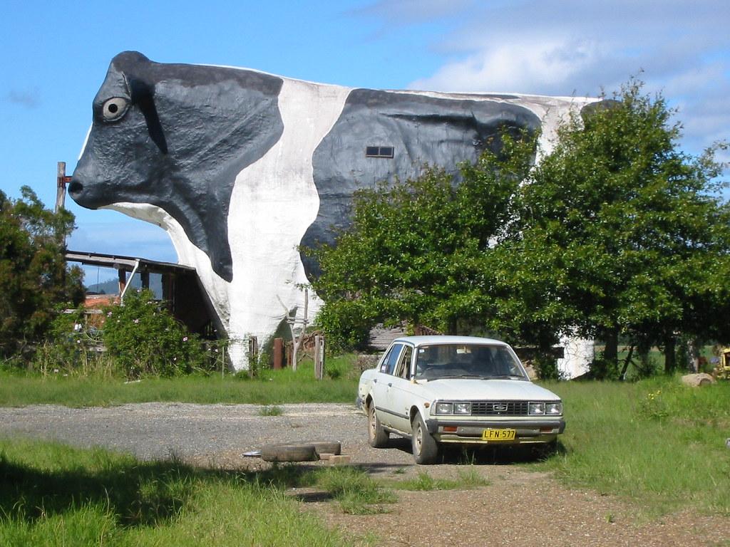 bid bull wauchope