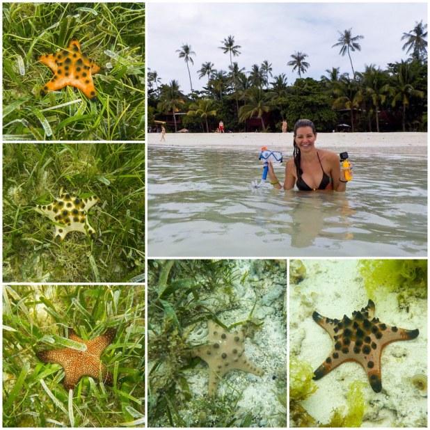 Estrellas de mar Alona beach