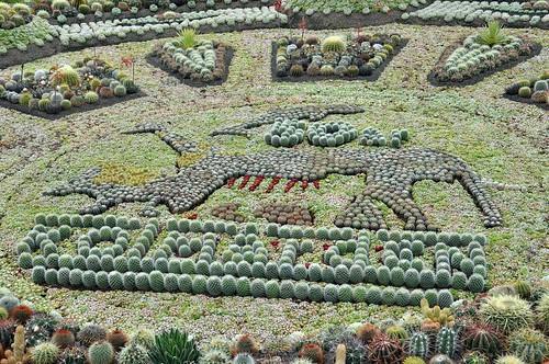 Logotyp typ kaktus