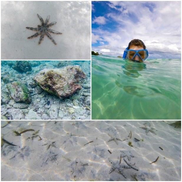 Snorkel en Malapascua
