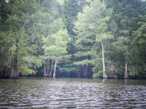 Sparkleberry Swamp-124