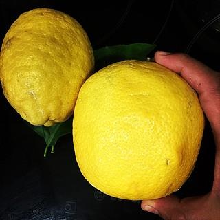 Limones y alcachofa
