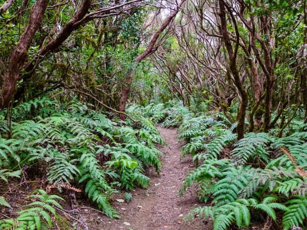 Bosque Encantado Tenerife