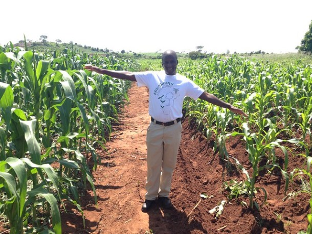 Mulundu Mwila, ZARI, standing in front of Gertrude Banda's trial and showing the performance of conservation agriculture and conventional ridge tillage. Photo credit:Christian Thierfelder/CIMMYT