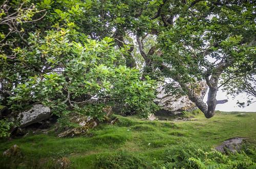 Killarny National Park