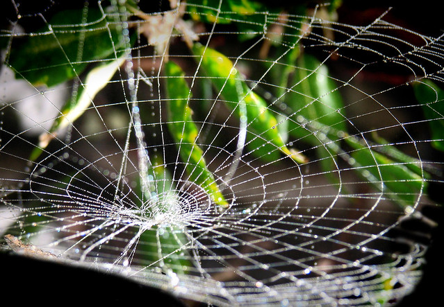 Spider Web Gravity Well The Spider That Made This Seems