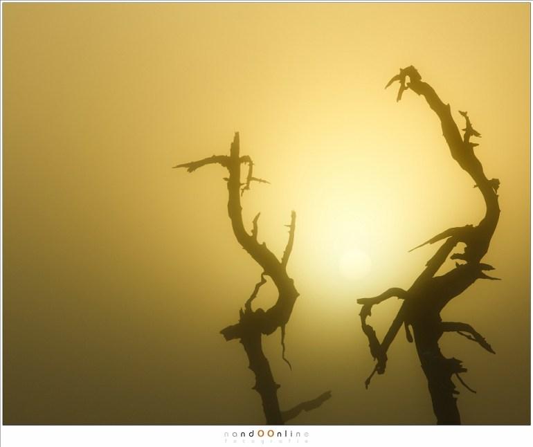 De zon gevangen in de klauwen van de dode bomen op Noir Flohay (200mm; ISO100; f/11; t=1/500)