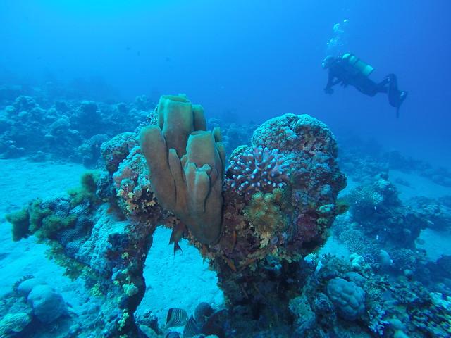 Aqaba diving dag 2 (1)