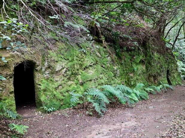Cuevas Bosque Encantado