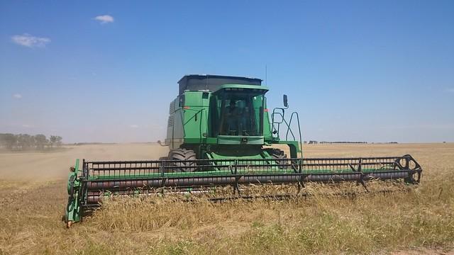 Emma: Harvest Time!