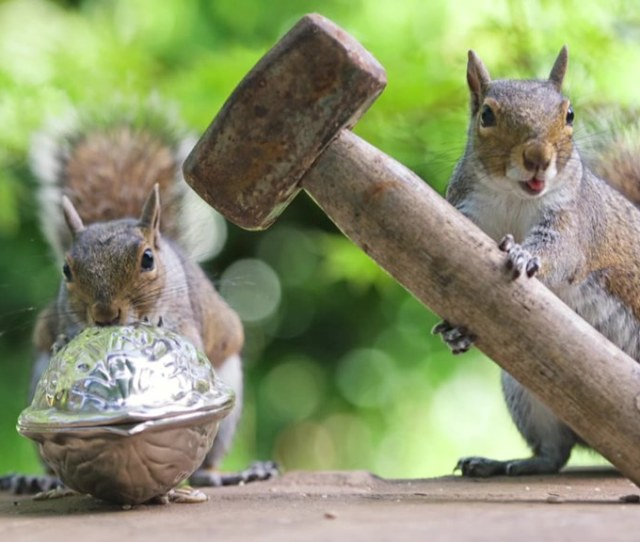 All Sizes Capturing The Secret Lives Of Squirrels Flickr Photo Sharing