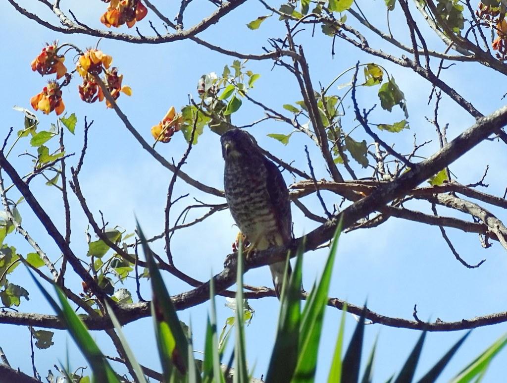 Ave Laguna Arenal Parque nacional Volcán Arenal Costa Rica 02